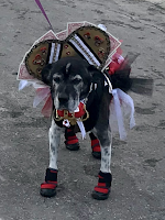 Doggie dresses up for Halloween